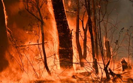 Western Cape Australian wildfires
