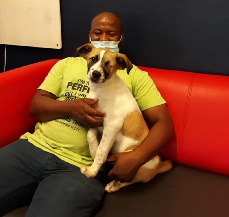 Remarkable recovery of dog beaten, left for dead and rescued from Hanover Park streets