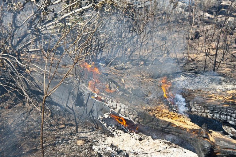 Table Mountain fire ignited by vagrants