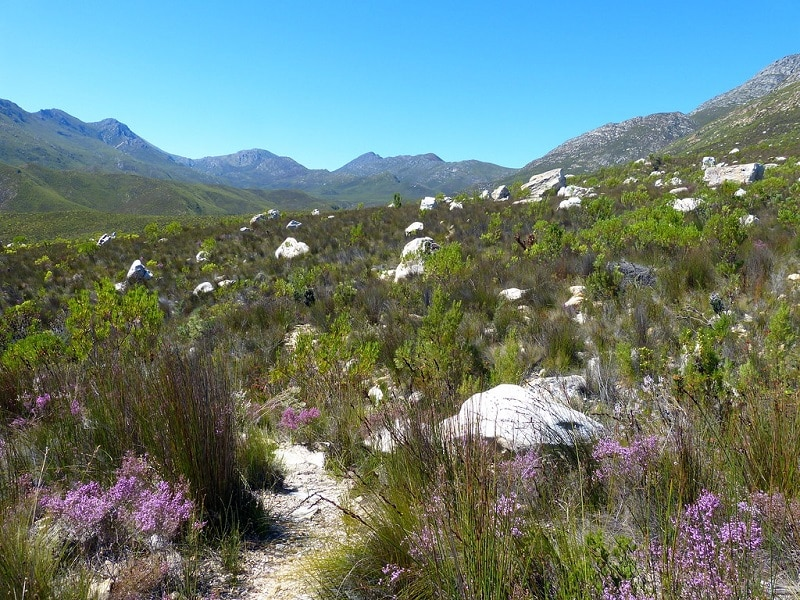 Missing woman found dead on a hiking trail in Barrydale