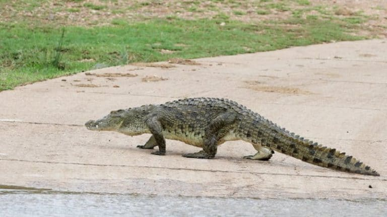 SAPS avails diving unit to assist with search for escaped crocodiles