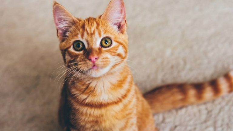 Suspected Manenberg cat killer taken in for questioning