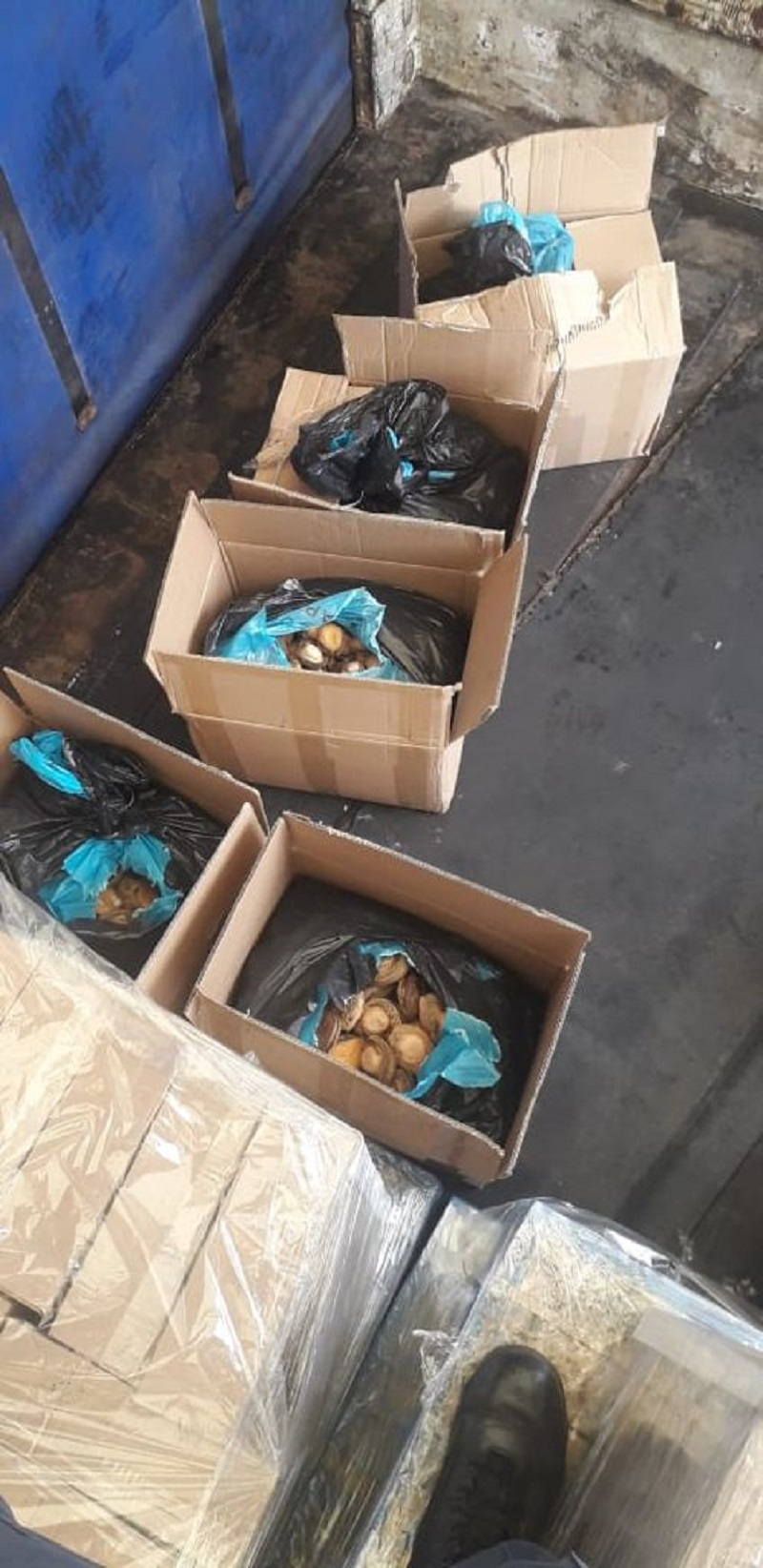 Abalone worth an estimated R2 million confiscated in Brackenfell